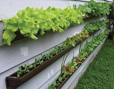 container-gardening-lettuce-vertical-wall-gutters-teaser-photo