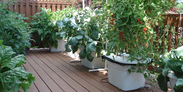 deck garden_1